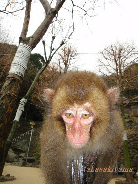 高崎 山 タクマ